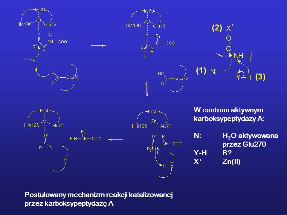Postulowany mechanizm reakcji katalizowanej przez karboksypeptydazę A W centrum aktywnym karboksypeptydazy A: N:H 2 O aktywowana przez Glu270 Y-HB.