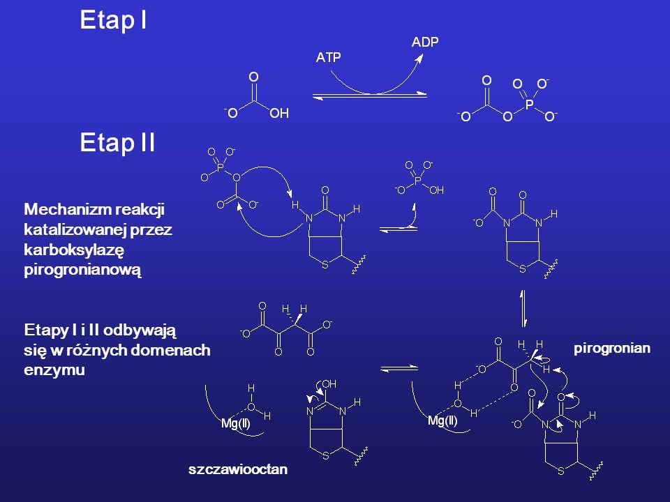 Etap I Etap II Mechanizm reakcji katalizowanej przez karboksylazę pirogronianową Etapy I i II odbywają się w różnych domenach enzymu pirogronian szczawiooctan