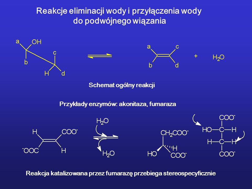 Reakcje eliminacji wody i przyłączenia wody do podwójnego wiązania Reakcja katalizowana przez fumarazę przebiega stereospecyficznie Schemat ogólny reakcji Przykłady enzymów: akonitaza, fumaraza