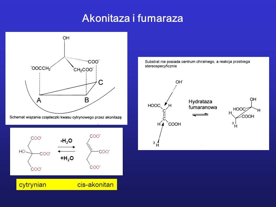 -H 2 O +H 2 O Akonitaza i fumaraza cytrynian cis-akonitan