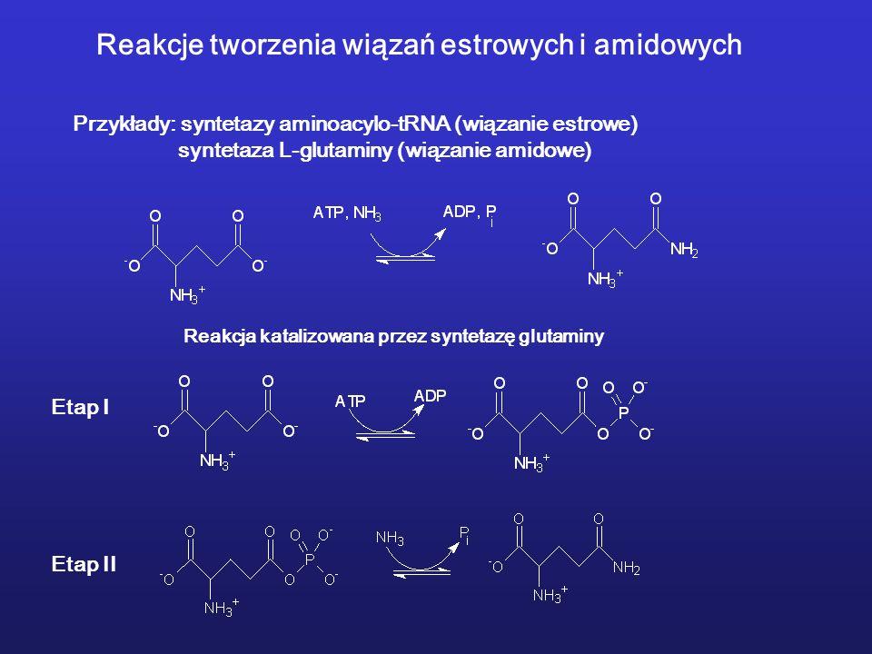 Reakcje tworzenia wiązań estrowych i amidowych Przykłady: syntetazy aminoacylo-tRNA (wiązanie estrowe) syntetaza L-glutaminy (wiązanie amidowe) Reakcja katalizowana przez syntetazę glutaminy Etap I Etap II