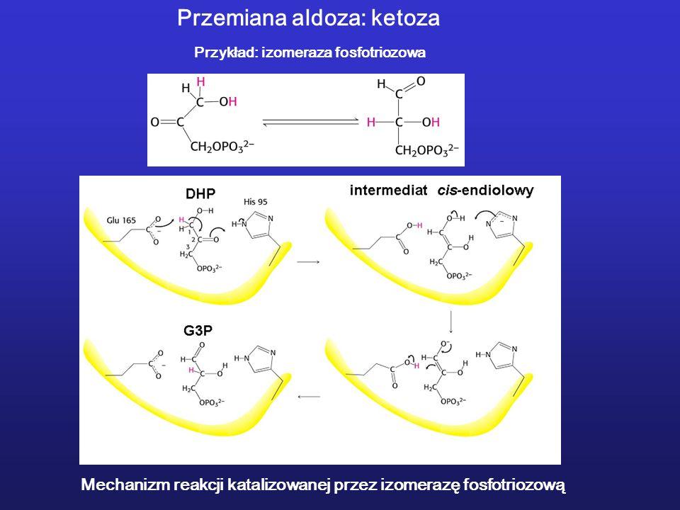 Mechanizm reakcji katalizowanej przez izomerazę fosfotriozową Przemiana aldoza: ketoza Przykład: izomeraza fosfotriozowa