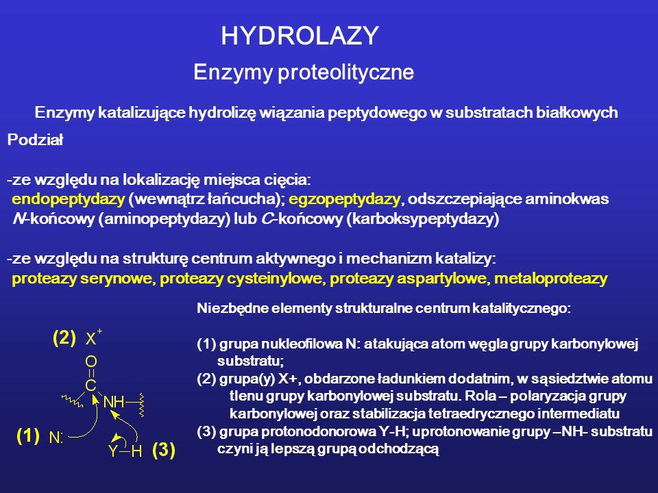 HYDROLAZY Enzymy proteolityczne Enzymy katalizujące hydrolizę wiązania peptydowego w substratach białkowych Podział -ze względu na lokalizację miejsca cięcia: endopeptydazy (wewnątrz łańcucha); egzopeptydazy, odszczepiające aminokwas N-końcowy (aminopeptydazy) lub C-końcowy (karboksypeptydazy) -ze względu na strukturę centrum aktywnego i mechanizm katalizy: proteazy serynowe, proteazy cysteinylowe, proteazy aspartylowe, metaloproteazy Niezbędne elementy strukturalne centrum katalitycznego: (1) grupa nukleofilowa N: atakująca atom węgla grupy karbonylowej substratu; (2) grupa(y) X+, obdarzone ładunkiem dodatnim, w sąsiedztwie atomu tlenu grupy karbonylowej substratu.