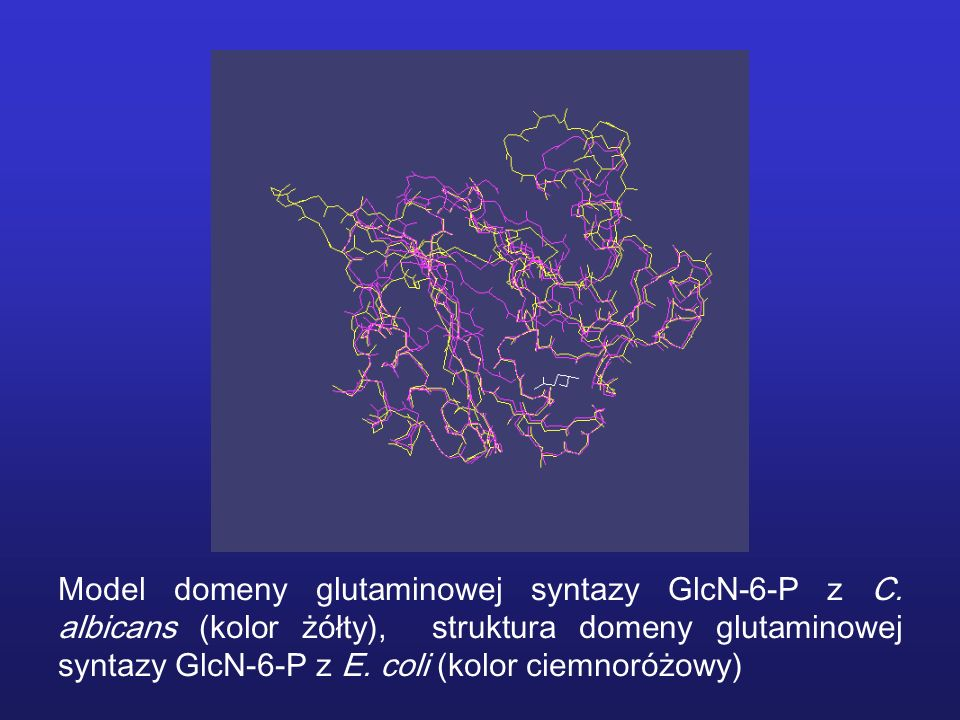 Model domeny glutaminowej syntazy GlcN-6-P z C. albicans (kolor żółty), struktura domeny glutaminowej syntazy GlcN-6-P z E. coli (kolor ciemnoróżowy)