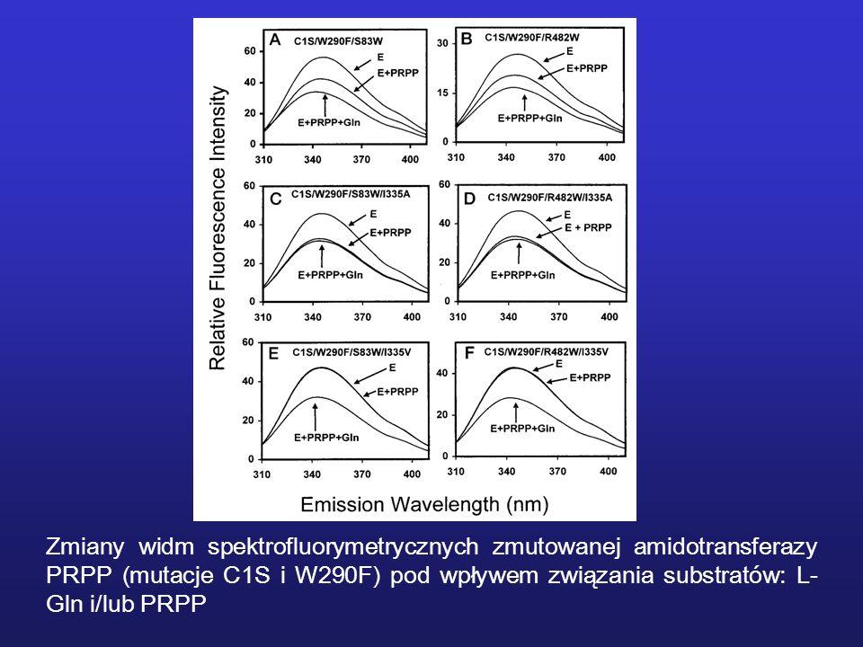 Zmiany widm spektrofluorymetrycznych zmutowanej amidotransferazy PRPP (mutacje C1S i W290F) pod wpływem związania substratów: L- Gln i/lub PRPP