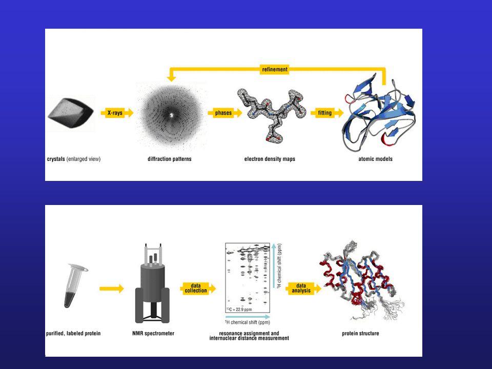 Specyficzne cechy kryształów białek - niewielkie rozmiary; zwykle < 1mm; - zawierają zwykle niewiele elementów symetrii, a w konsekwecji wykazują dość proste kształty; - kryształy białek są szczególnie wrażliwe i niestabilne; wynika to z dużej zawartości rozpuszczalnika (zwykle 40 – 70%); - kryształy białek są wrażliwe na zmiany pH, siły jonowej, temperatury; stabilność w niskich temperaturach można poprawić poprze użycie krioprotektantów; - kryształy białek często słabo rozpraszają promieniowanie rentgenowskie, z rozdzielczością niezadowalającą dla otrzymania danych strukturalnych