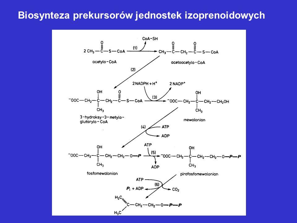 Inne prekursory idiolitów 3.Modyfikowane cukry – aminocukry, N-metyloaminocukry deoksycukry, cyklitole, pochodne amidynowe 1.Jednostki izoprenoidowe –