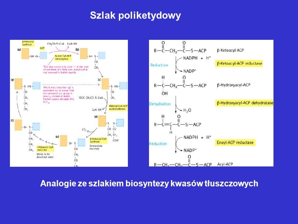 Biosynteza prekursorów jednostek izoprenoidowych
