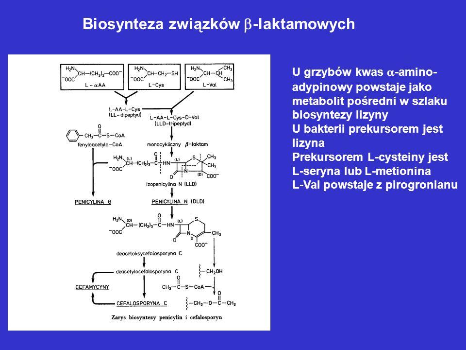 Szlak poliketydowy Cechy charakterystyczne – porównanie ze szlakiem biosyntezy kwasów tłuszczowych 1.Zużywanie różnych prekursorów 2. Różny stopień re