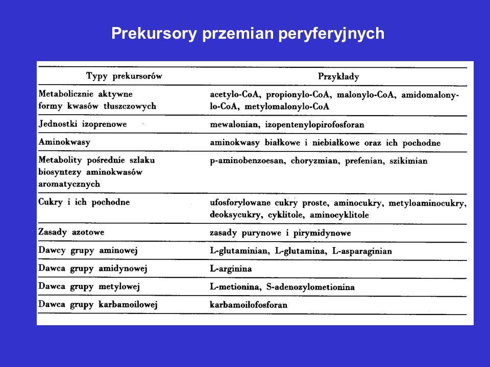 Biosynteza związków -laktamowych U grzybów kwas -amino- adypinowy powstaje jako metabolit pośredni w szlaku biosyntezy lizyny U bakterii prekursorem jest lizyna Prekursorem L-cysteiny jest L-seryna lub L-metionina L-Val powstaje z pirogronianu