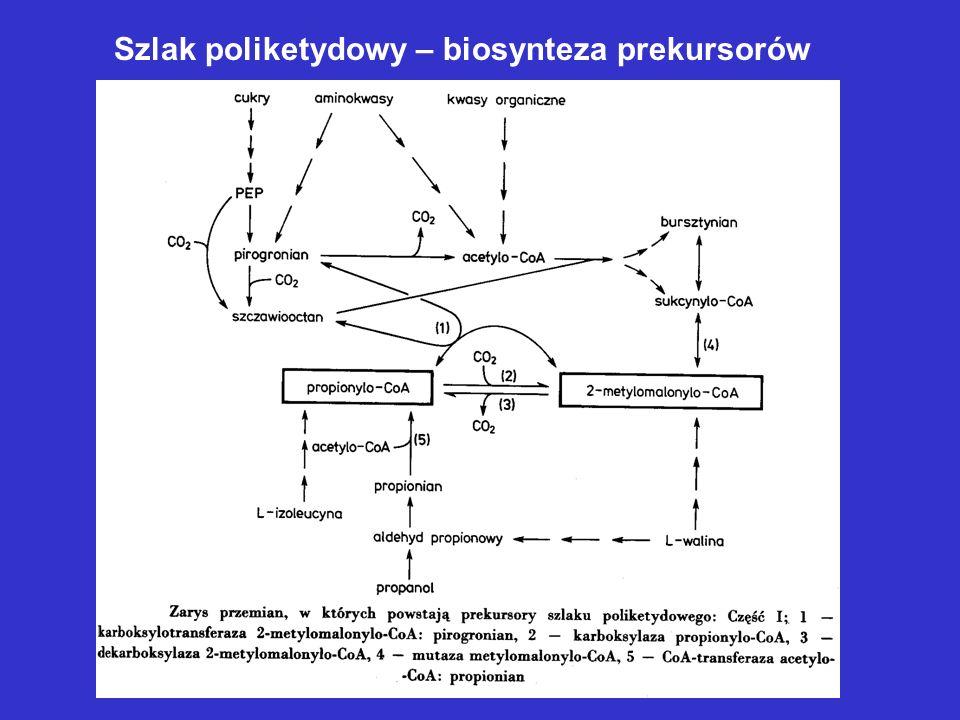 Biosynteza antybiotyków polipeptydowych Większość poza rybosomami Sekwencja peptydu uwarunkowana strukturą białek syntezujących