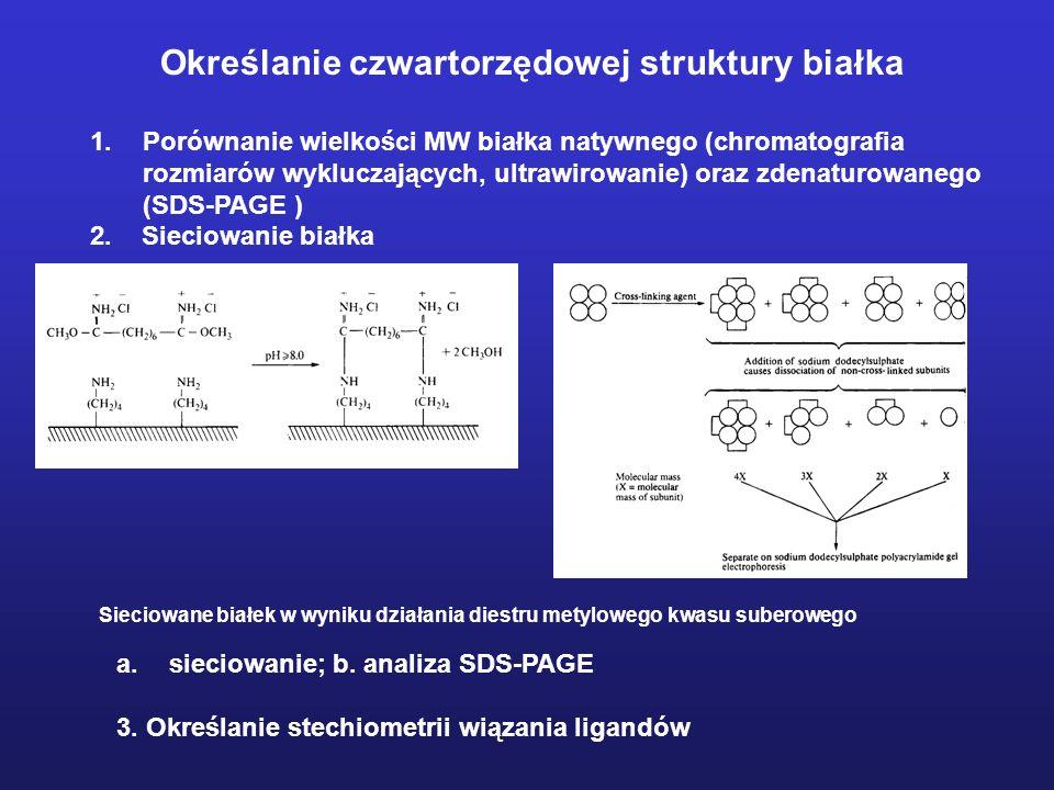 1.Porównanie wielkości MW białka natywnego (chromatografia rozmiarów wykluczających, ultrawirowanie) oraz zdenaturowanego (SDS-PAGE ) 2. Sieciowanie b