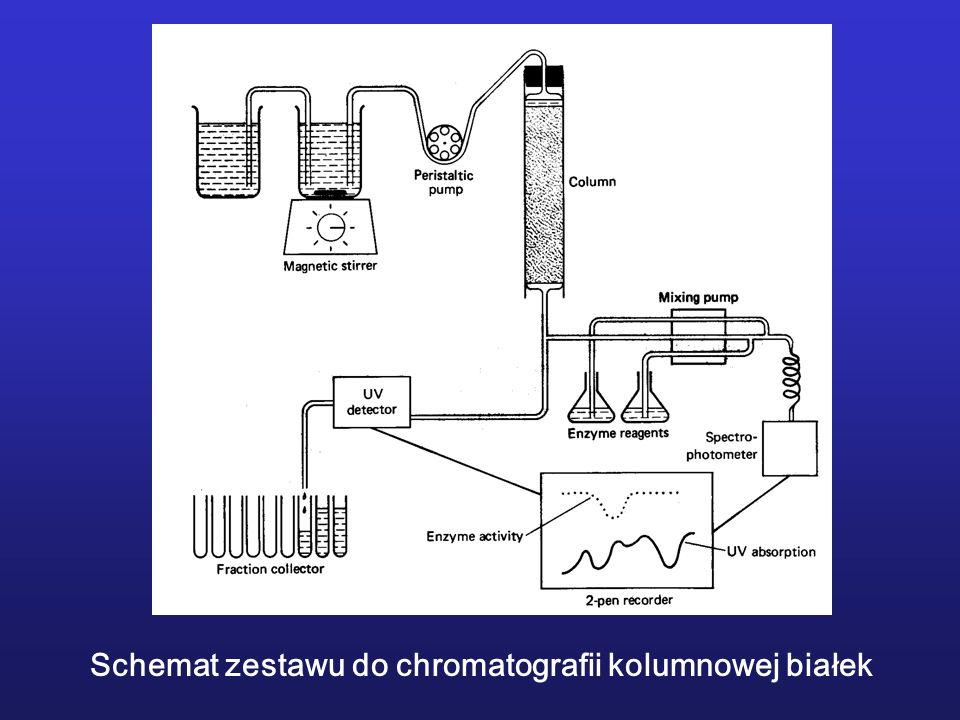 Schemat zestawu do chromatografii kolumnowej białek