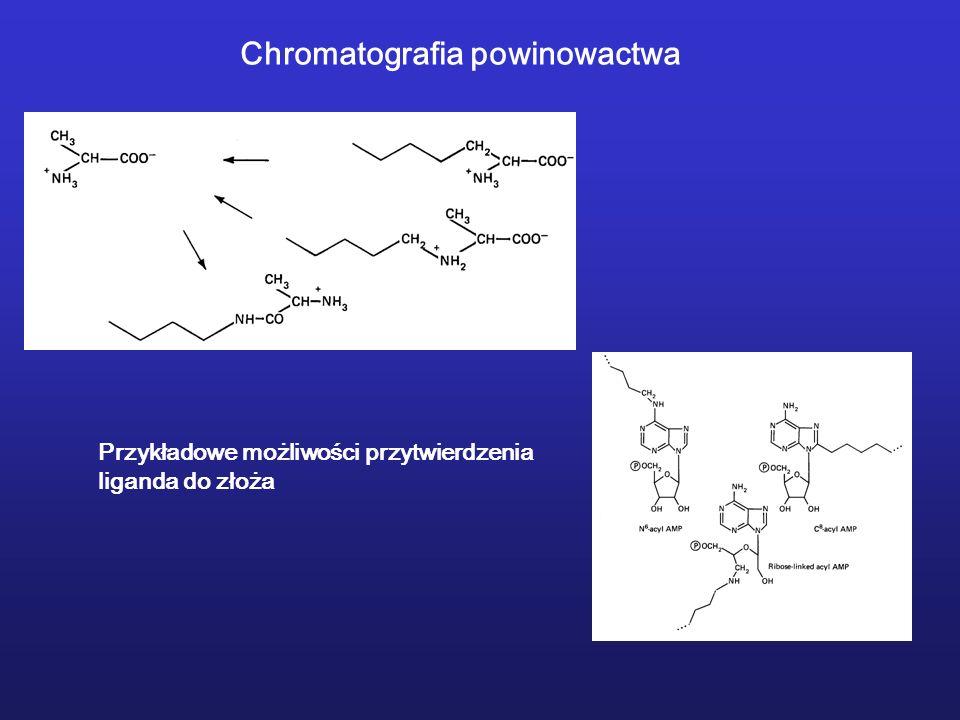 Przykładowe możliwości przytwierdzenia liganda do złoża Chromatografia powinowactwa