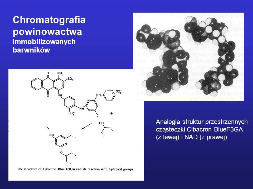 Chromatografia powinowactwa immobilizowanych barwników Analogia struktur przestrzennych cząsteczki Cibacron BlueF3GA (z lewej) i NAD (z prawej)