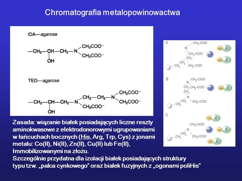 Chromatografia metalopowinowactwa Zasada: wiązanie białek posiadających liczne reszty aminokwasowe z elektrodonorowymi ugrupowaniami w łańcuchach bocz