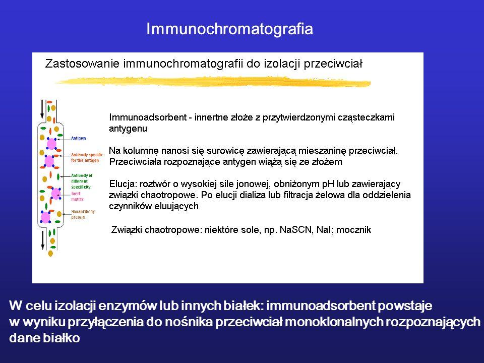 Immunochromatografia W celu izolacji enzymów lub innych białek: immunoadsorbent powstaje w wyniku przyłączenia do nośnika przeciwciał monoklonalnych r