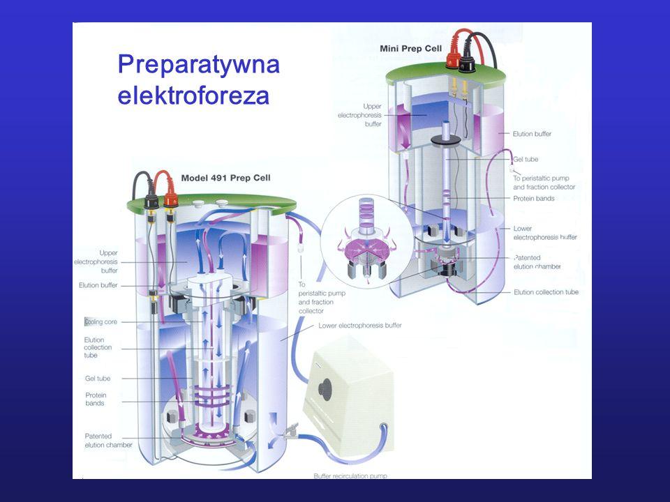 Preparatywna elektroforeza