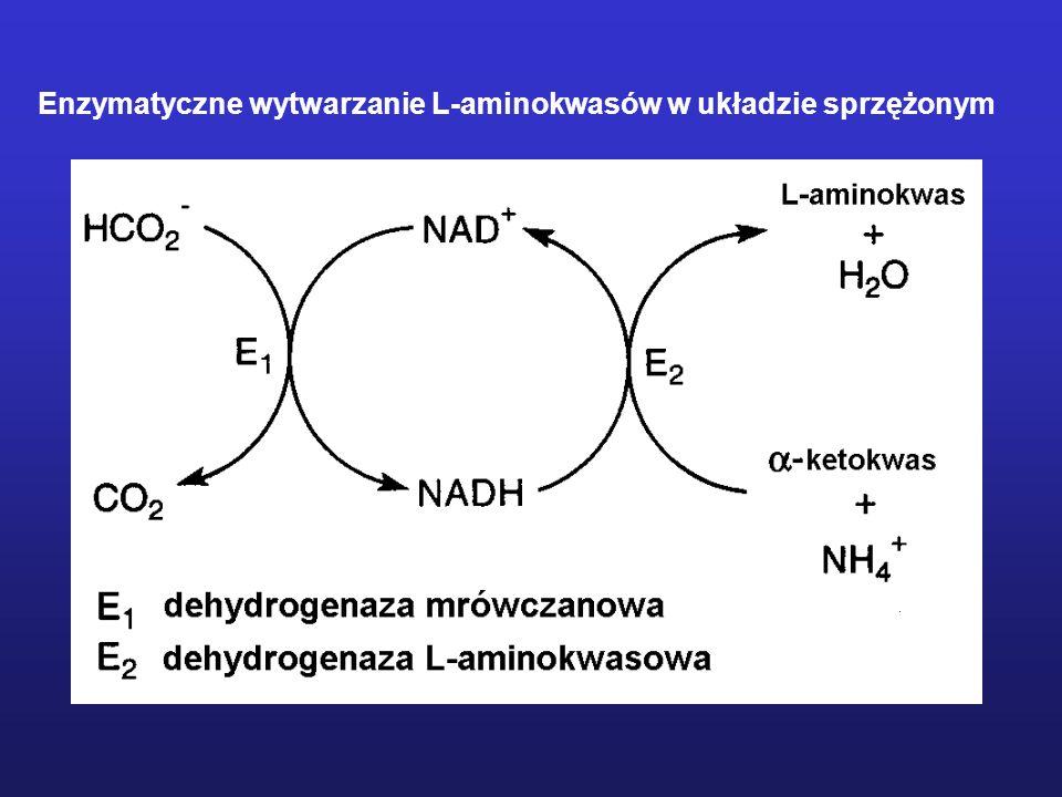 Enzymatyczne wytwarzanie L-aminokwasów w układzie sprzężonym