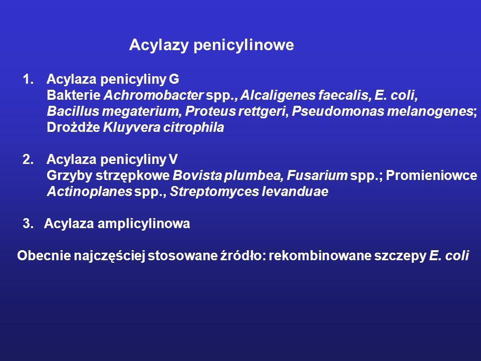 Acylazy penicylinowe 1.Acylaza penicyliny G Bakterie Achromobacter spp., Alcaligenes faecalis, E. coli, Bacillus megaterium, Proteus rettgeri, Pseudom