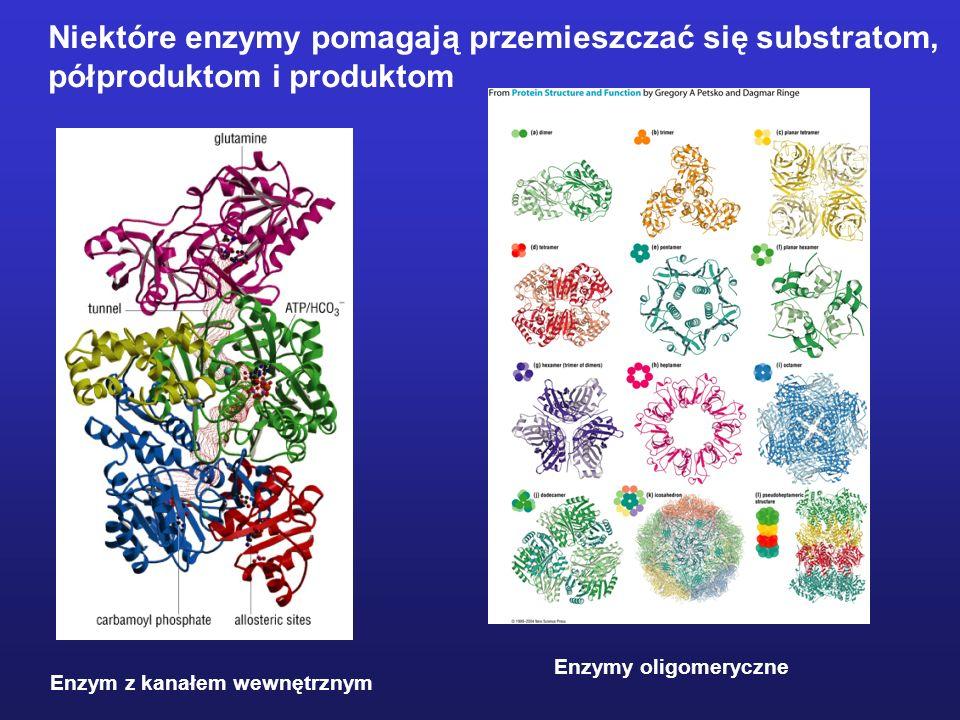 Niektóre są białkami rozpuszczalnymi - globularnymi Niektóre zlokalizowane są w błonach biologicznych
