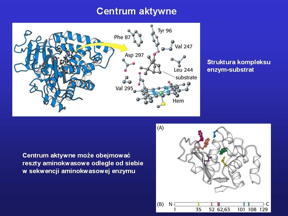 Dlaczego enzymy są tak efektywnymi katalizatorami? -grupy funkcyjne w centrum aktywnym -hydrofobowy charakter centrum aktywnego -współdziałanie koenzy