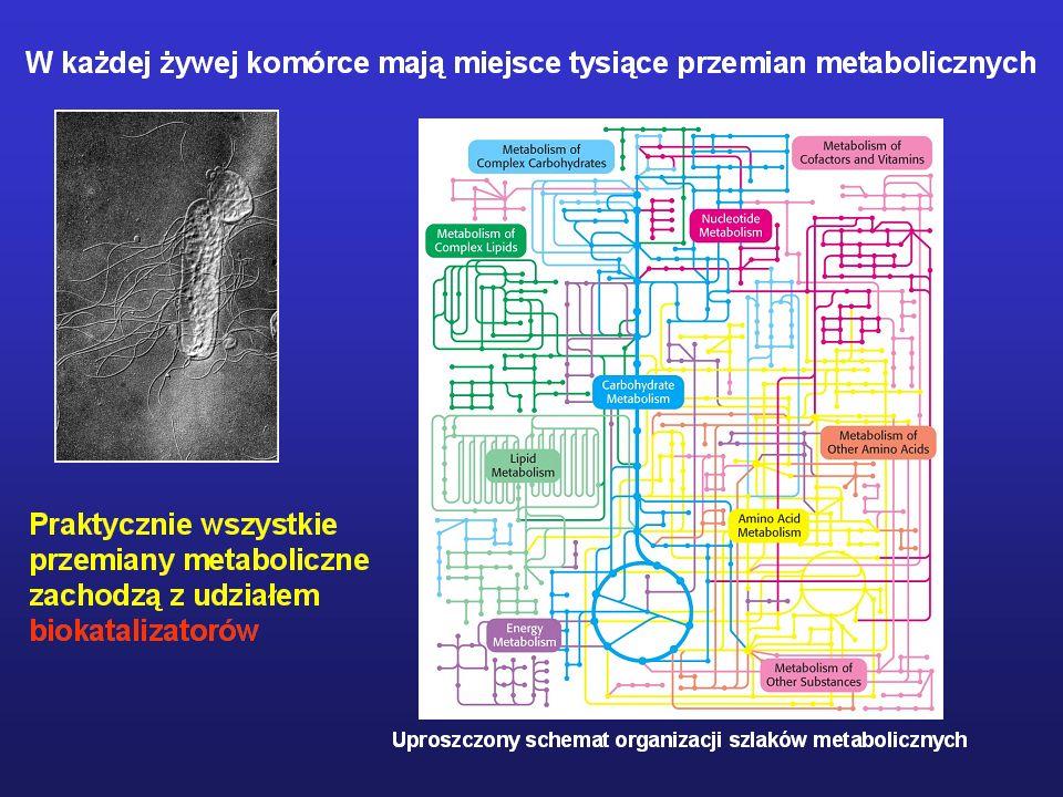 Enzymologia-1 Informacje wstępne Aktywność katalityczna enzymów
