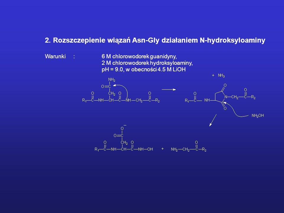 2. Rozszczepienie wiązań Asn-Gly działaniem N-hydroksyloaminy Warunki: 6 M chlorowodorek guanidyny, 2 M chlorowodorek hydroksyloaminy, pH = 9.0, w obe