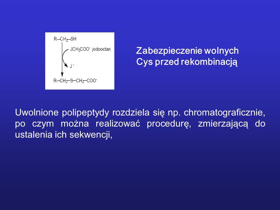 Zabezpieczenie wolnych Cys przed rekombinacją Uwolnione polipeptydy rozdziela się np. chromatograficznie, po czym można realizować procedurę, zmierzaj