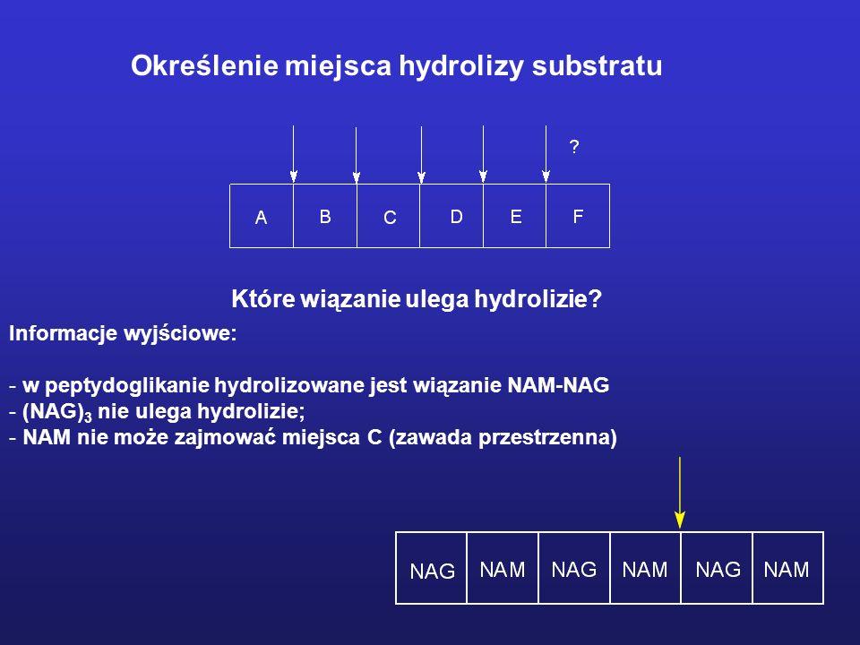 Obraz struktury kompleksu enzym:NAM-NAG-NAM.