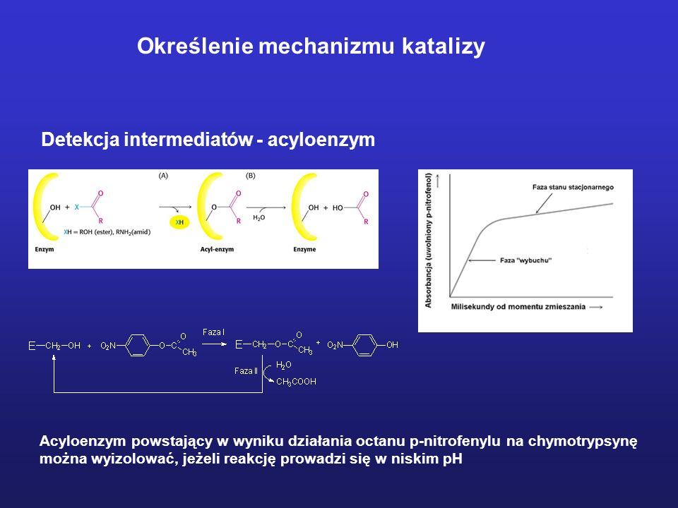 Wiązanie substratu Hydrofobowa kieszeń chymotrypsyny; miejsce rozpoznania i wiązania substratu Porównanie miejsc wiązania substratu w niektórych proteazach serynowych
