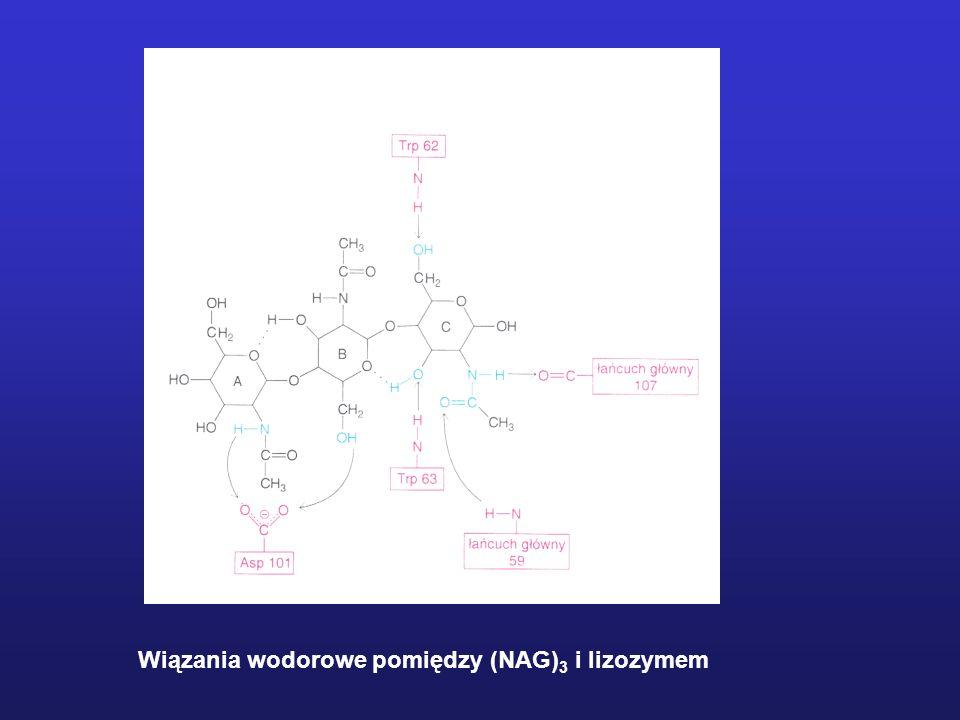 Model przestrzenny cząsteczki lizozymu