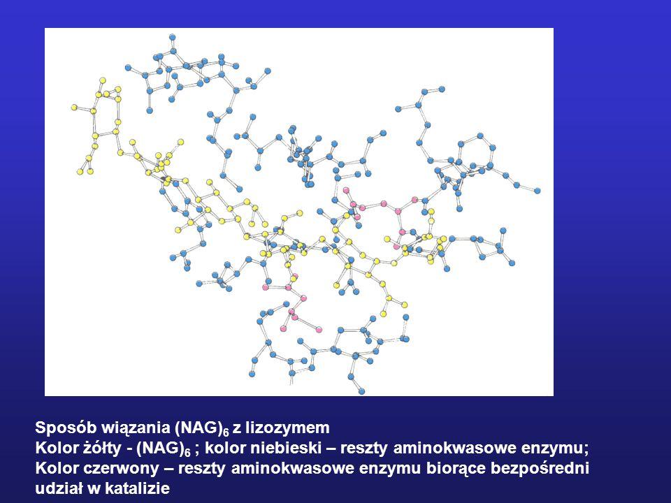 Sposób wiązania (NAG) 6 z lizozymem Kolor żółty - (NAG) 6 ; kolor niebieski – reszty aminokwasowe enzymu; Kolor czerwony – reszty aminokwasowe enzymu biorące bezpośredni udział w katalizie
