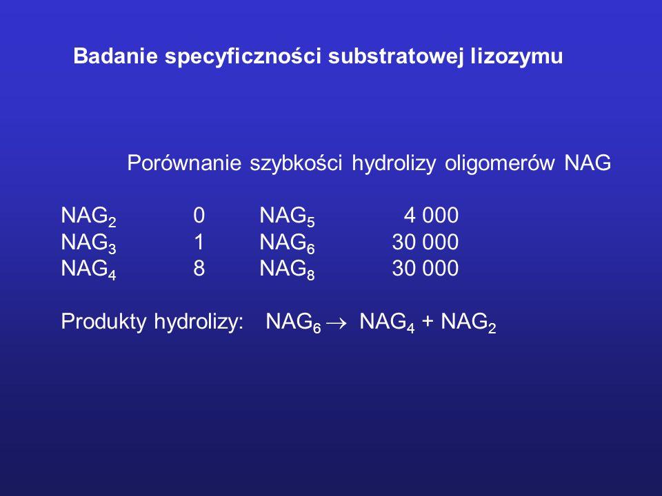 Porównanie szybkości hydrolizy oligomerów NAG NAG 2 0NAG 5 4 000 NAG 3 1NAG 6 30 000 NAG 4 8NAG 8 30 000 Produkty hydrolizy: NAG 6 NAG 4 + NAG 2 Badanie specyficzności substratowej lizozymu
