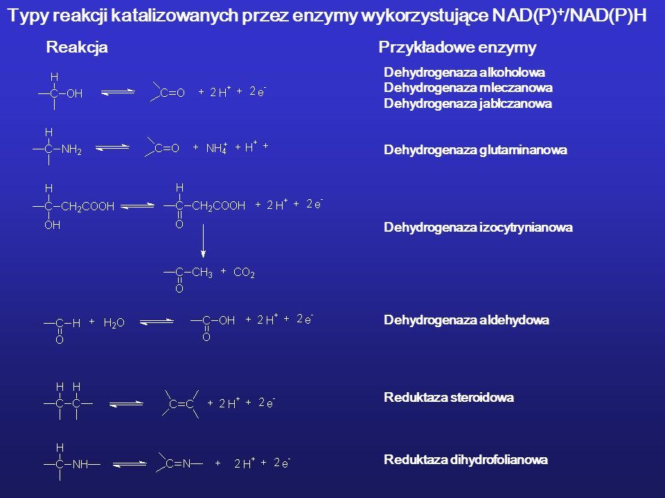 Dehydrogenaza alkoholowa Dehydrogenaza mleczanowa Dehydrogenaza jabłczanowa Dehydrogenaza glutaminanowa Dehydrogenaza izocytrynianowa Dehydrogenaza aldehydowa Reduktaza steroidowa Reduktaza dihydrofolianowa ReakcjaPrzykładowe enzymy Typy reakcji katalizowanych przez enzymy wykorzystujące NAD(P) + /NAD(P)H