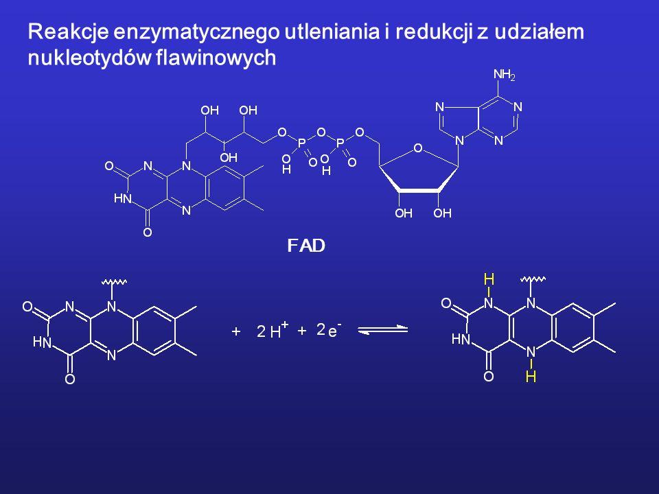 Reakcje enzymatycznego utleniania i redukcji z udziałem nukleotydów flawinowych FAD