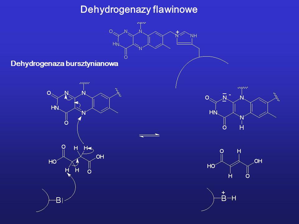 Dehydrogenazy flawinowe Dehydrogenaza bursztynianowa