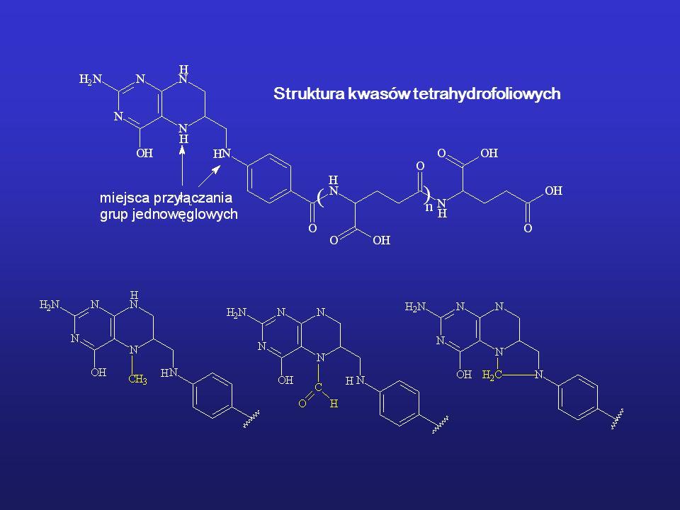 Struktura kwasów tetrahydrofoliowych