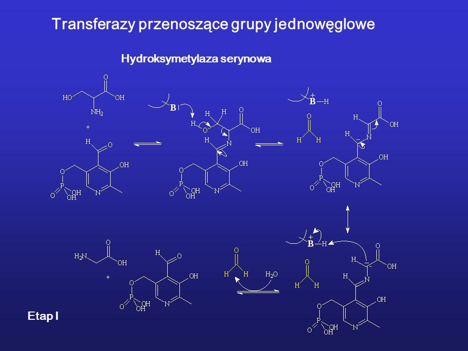 Transferazy przenoszące grupy jednowęglowe Hydroksymetylaza serynowa Etap I