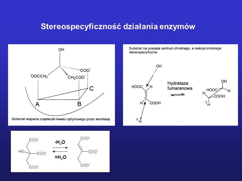 Stereospecyficzność działania enzymów -H 2 O +H 2 O