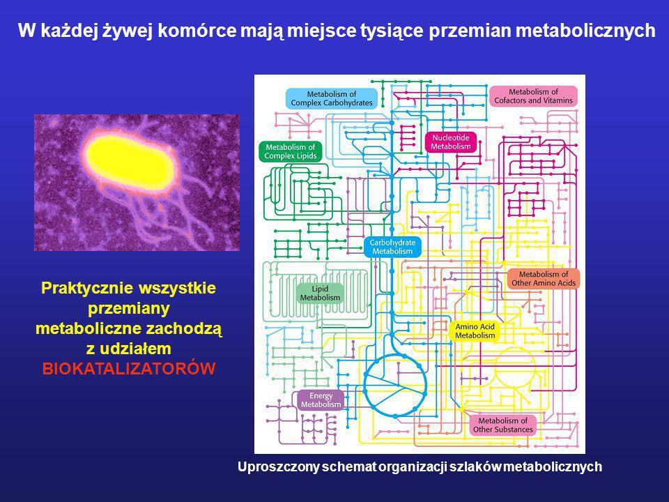 Uproszczony schemat organizacji szlaków metabolicznych W każdej żywej komórce mają miejsce tysiące przemian metabolicznych Praktycznie wszystkie przem