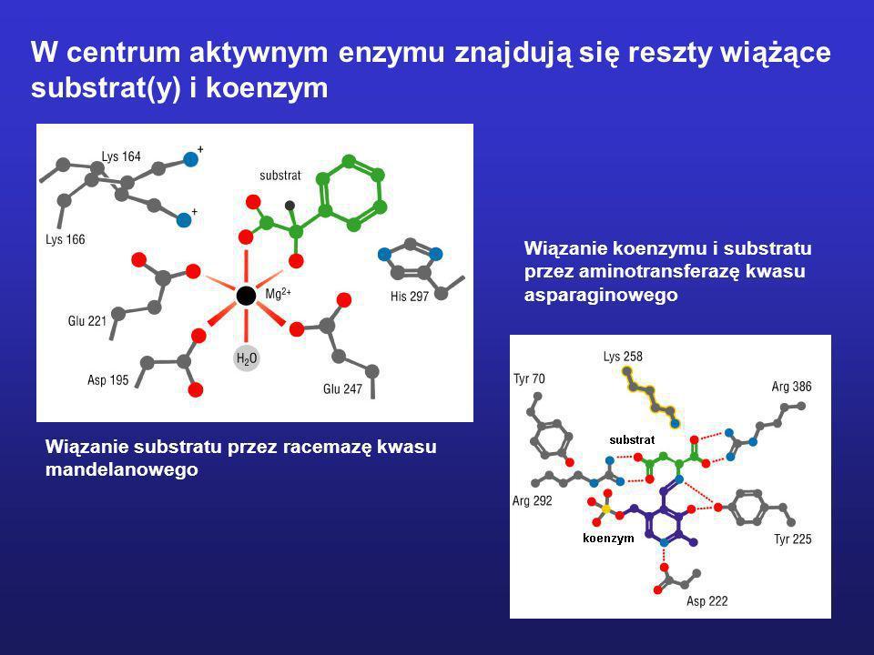 Wiązanie substratu przez racemazę kwasu mandelanowego Wiązanie koenzymu i substratu przez aminotransferazę kwasu asparaginowego W centrum aktywnym enz