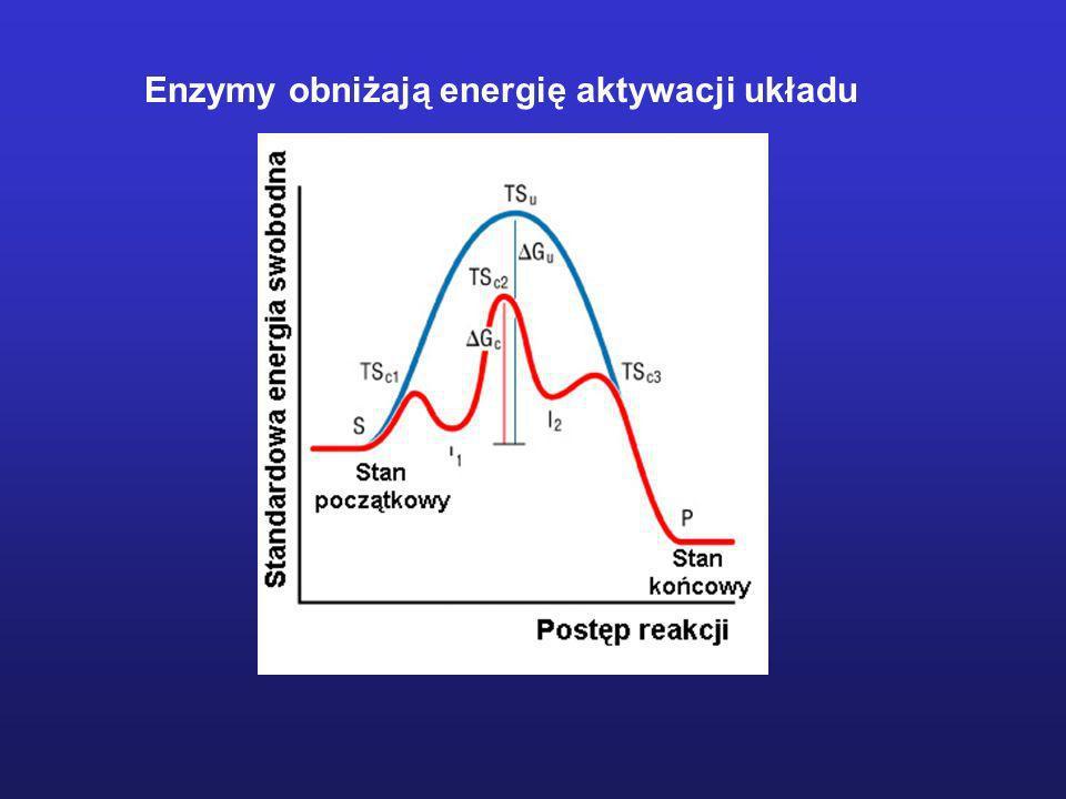 Enzymy obniżają energię aktywacji układu