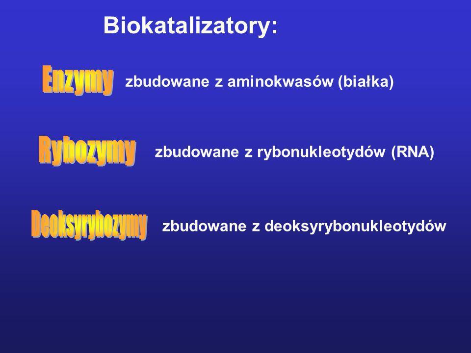 zbudowane z deoksyrybonukleotydów Biokatalizatory: zbudowane z aminokwasów (białka) zbudowane z rybonukleotydów (RNA)