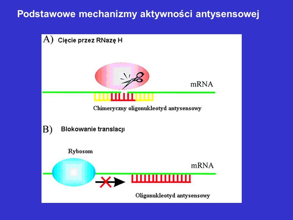 ZaletyWady I generacjaOporność na działanie nukleazGenerowanie chiralności Aktywacja RNazy HWiązanie z białkami/toksyczność II generacjaMniejsza toksycznośćBrak aktywacji RNazy H Brak problemów stereochemicznych GapmeryON chimeryczne (środek PS, na końcach OMe lub MOE) III generacja PNANiewielka toksycznośćBrak indukcji RNazy H Problemy z rozpuszczalnością LNADuża odporność na działanie nukleaz Wysokie powinowactwo do mRNA Pożądane cechy ON: - długość 17 – 21 nukleotydów - sekwencja komplementarna do specyficznej sekwencji celu molekularnego - unikanie sekwencji: tworzących niepożądane struktury II-rzędowe, tworzących G-kwartety, motywów CpG - odporność na działanie nukleaz - zdolność do indukowania działania RNazy H - brak efektów ubocznych