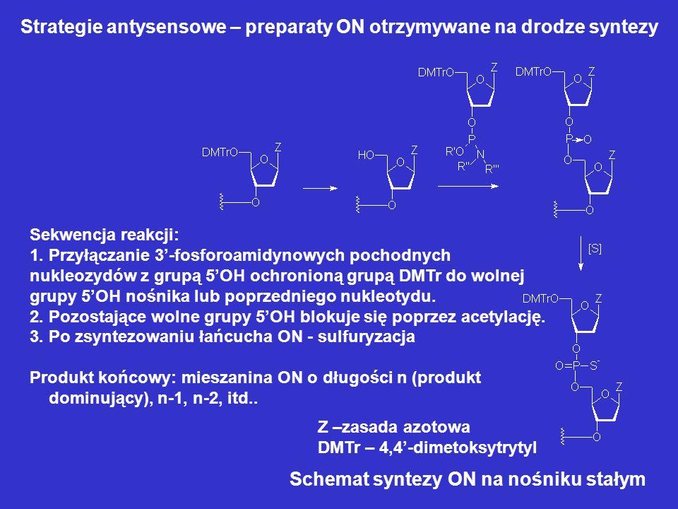 Strategie antysensowe – preparaty ON otrzymywane na drodze syntezy Schemat syntezy ON na nośniku stałym Z –zasada azotowa DMTr – 4,4-dimetoksytrytyl S