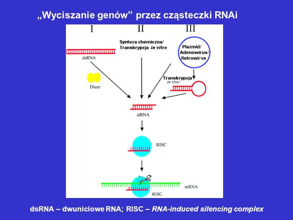 Wyciszanie genów przez cząsteczki RNAi dsRNA – dwuniciowe RNA; RISC – RNA-induced silencing complex