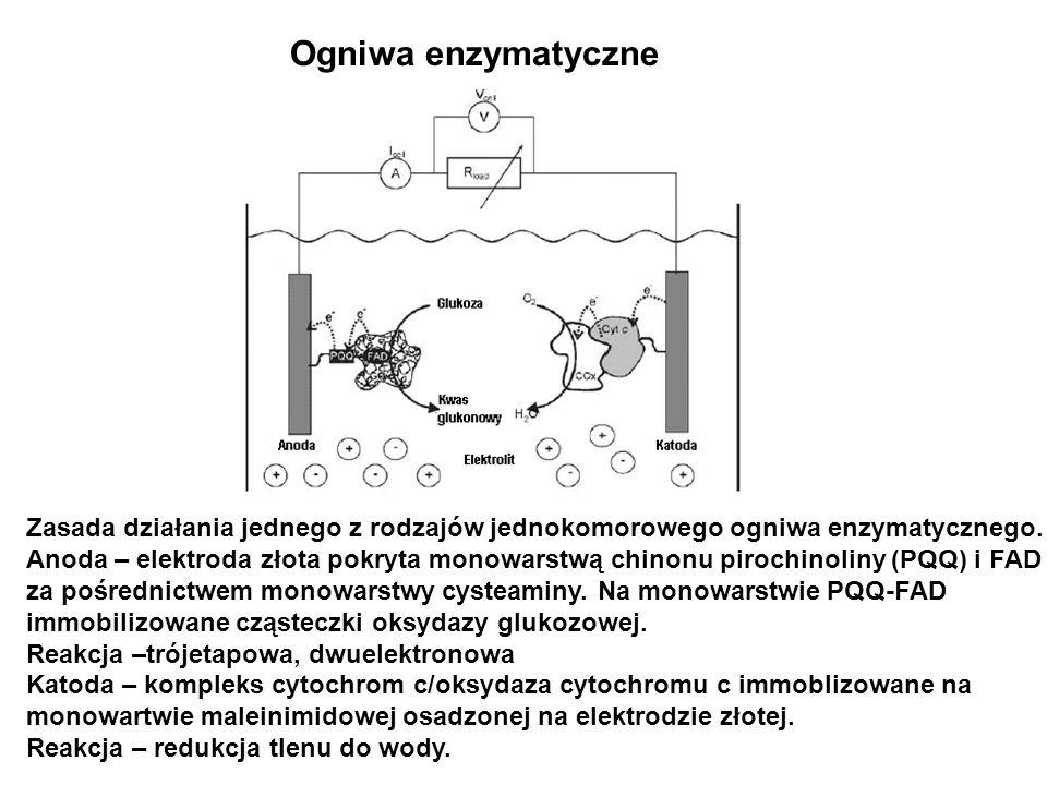 Ogniwa enzymatyczne Zasada działania jednego z rodzajów jednokomorowego ogniwa enzymatycznego. Anoda – elektroda złota pokryta monowarstwą chinonu pir