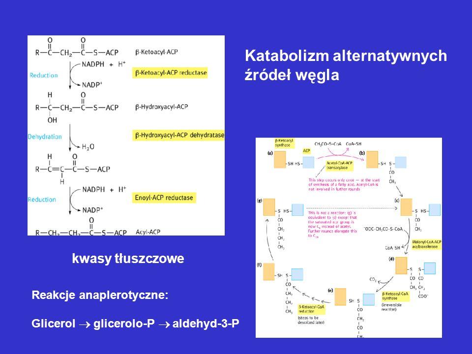 Katabolizm alternatywnych źródeł węgla kwasy tłuszczowe Reakcje anaplerotyczne: Glicerol glicerolo-P aldehyd-3-P