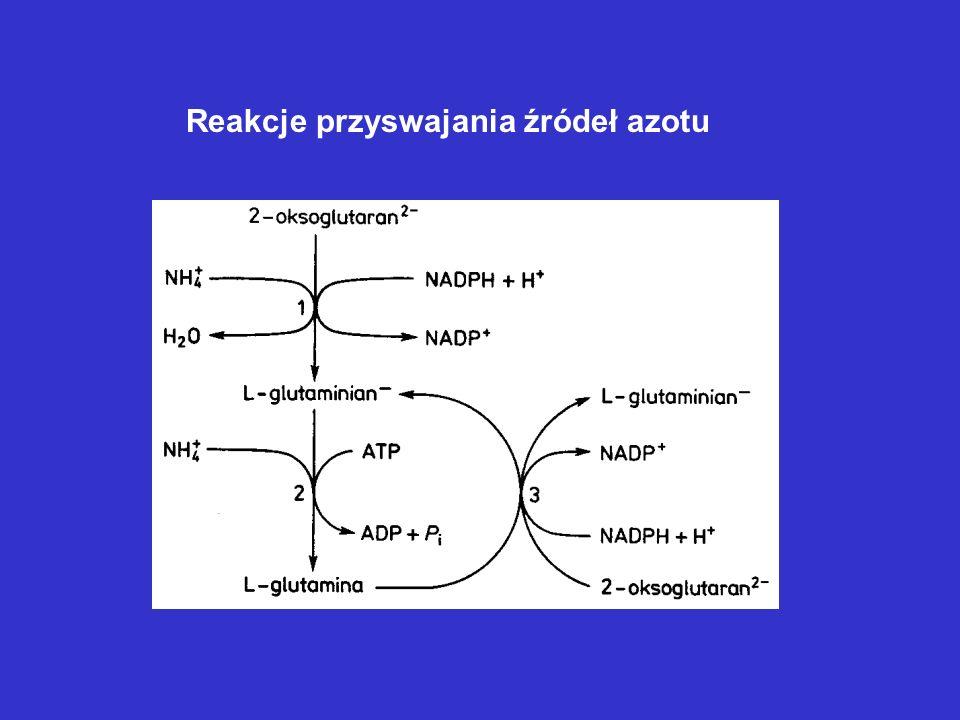 Reakcje przyswajania źródeł azotu